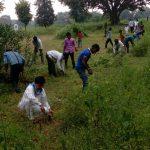 CHICHLI samithi of *NARSIMHPUR district (Madhya Pradesh) does Seva